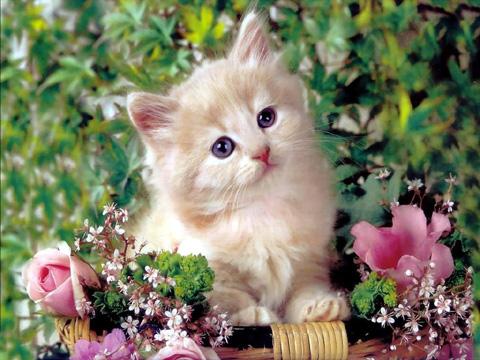 Пр. Мария-Антоанета Animals16