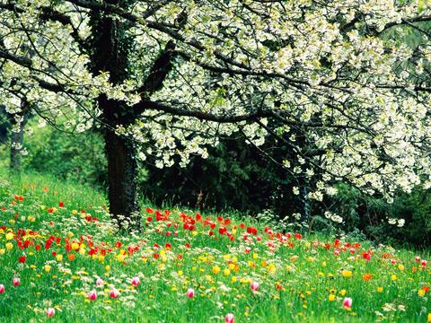 flower136.jpg