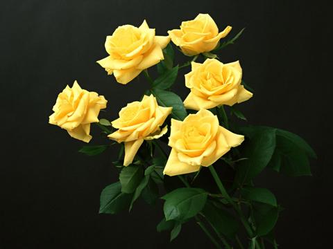 Кои са ви любимите цветя? Flower36